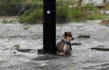 【拡散希望】「すべての犬を家の中にしまえ」「猫もしまえ」台風や災害の時にペットを外に置いたままにしたり、繋いだままにしないでください!
