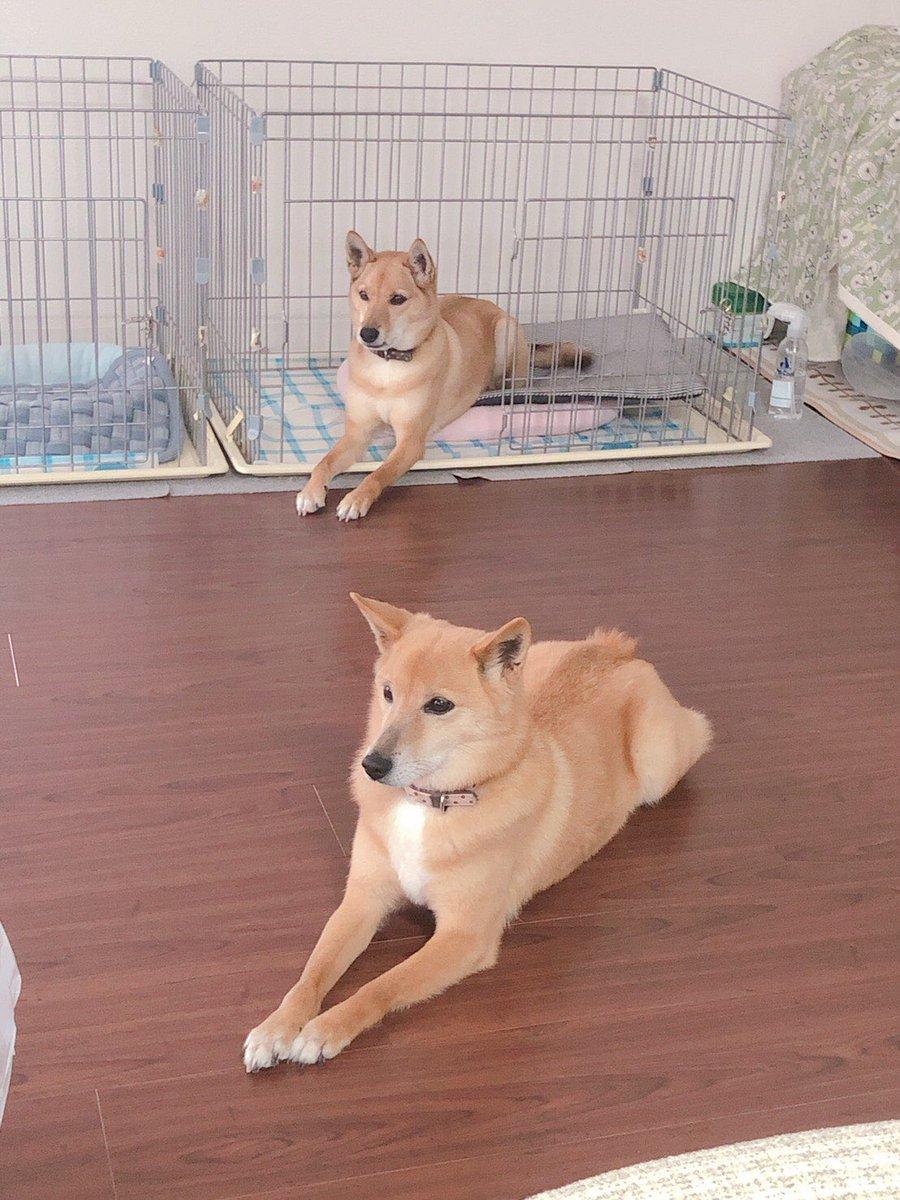 【拡散希望】「すべての犬を家の中にしまえ」「猫もしまえ」ペットを外に置いたままにしたり、繋いだままにしないでください!