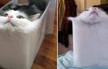 """フランスの物理学者が数式を用い、猫が""""液体""""か""""固体""""かを決定づけたことでイグ・ノーベル賞を受賞!"""
