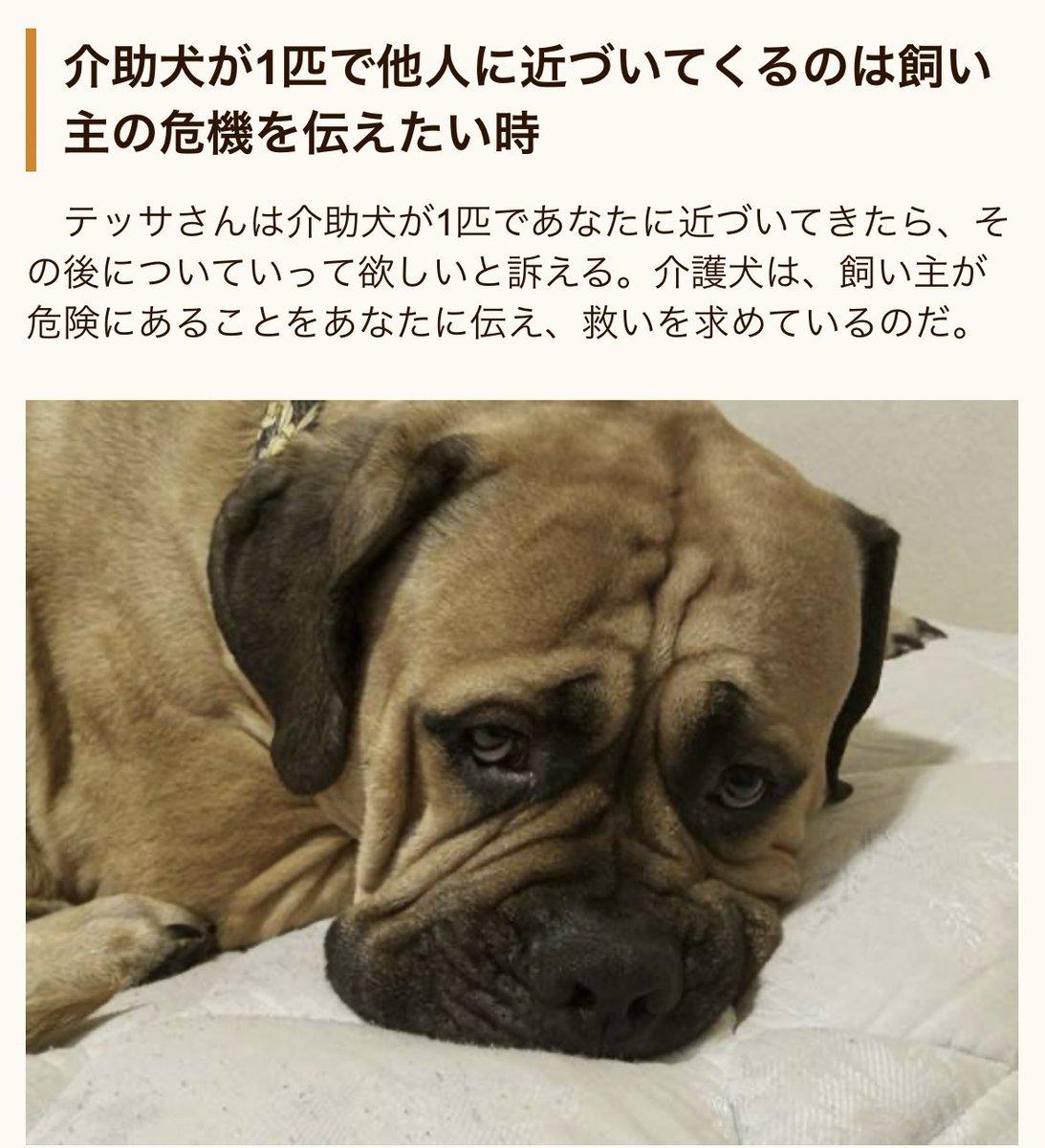 【拡散希望】介助犬が1匹で近づいてきた時は飼い主の危機を伝えたい時です決して追い払わず怖がらないで下さい。