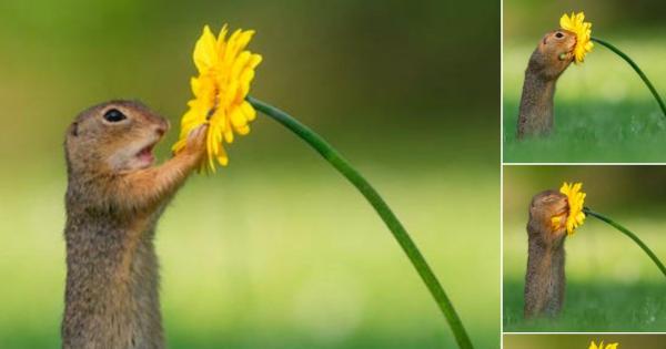 リスが花の蜜の匂いを嗅ぐシーンがまるで童話みたいだと話題に!