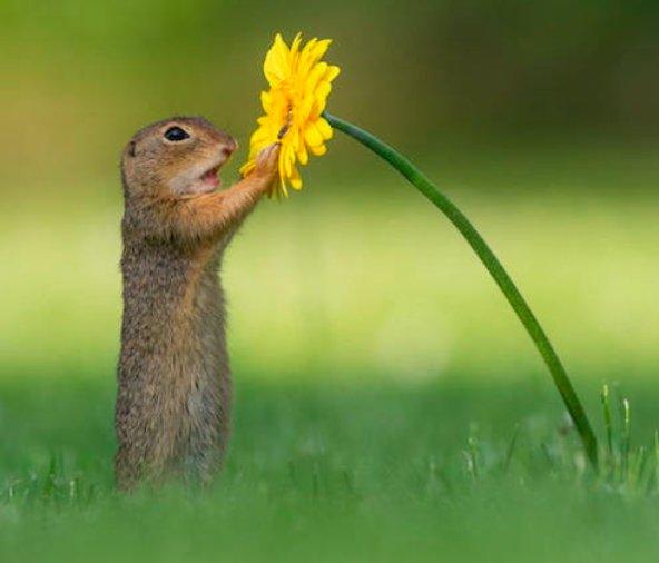 リスが花の蜜の匂いを嗅ぐシーンがまるで童話の世界みたいだと話題に!
