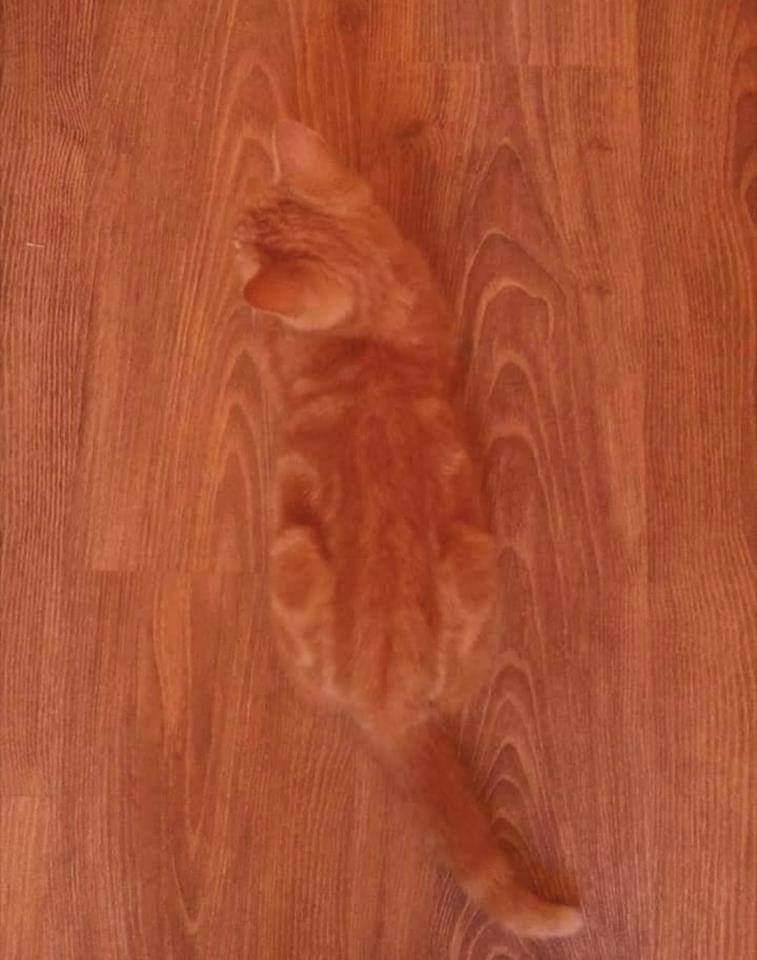 完全保護色を実現したネコ