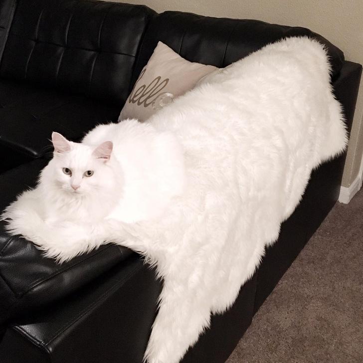 完全保護色の猫