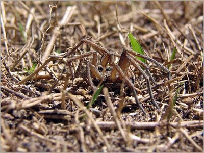 完全保護色の蜘蛛(クモ)