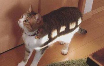 ネコバスみたいな猫が可愛すぎると話題に!