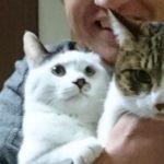 猫と一緒にいると健康効果を得られます。血圧の低下や傷の治癒など科学的に証明されているものも。