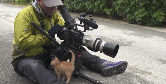 将来の名カメラマンを予感させる猫さん「片目凝らして 姿勢もいい(猫背無し)」