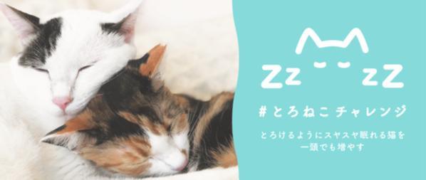 「#とろねこチャレンジ」プロジェクトが開始!殺処分されてしまう3万匹の猫たちを救って欲しい!