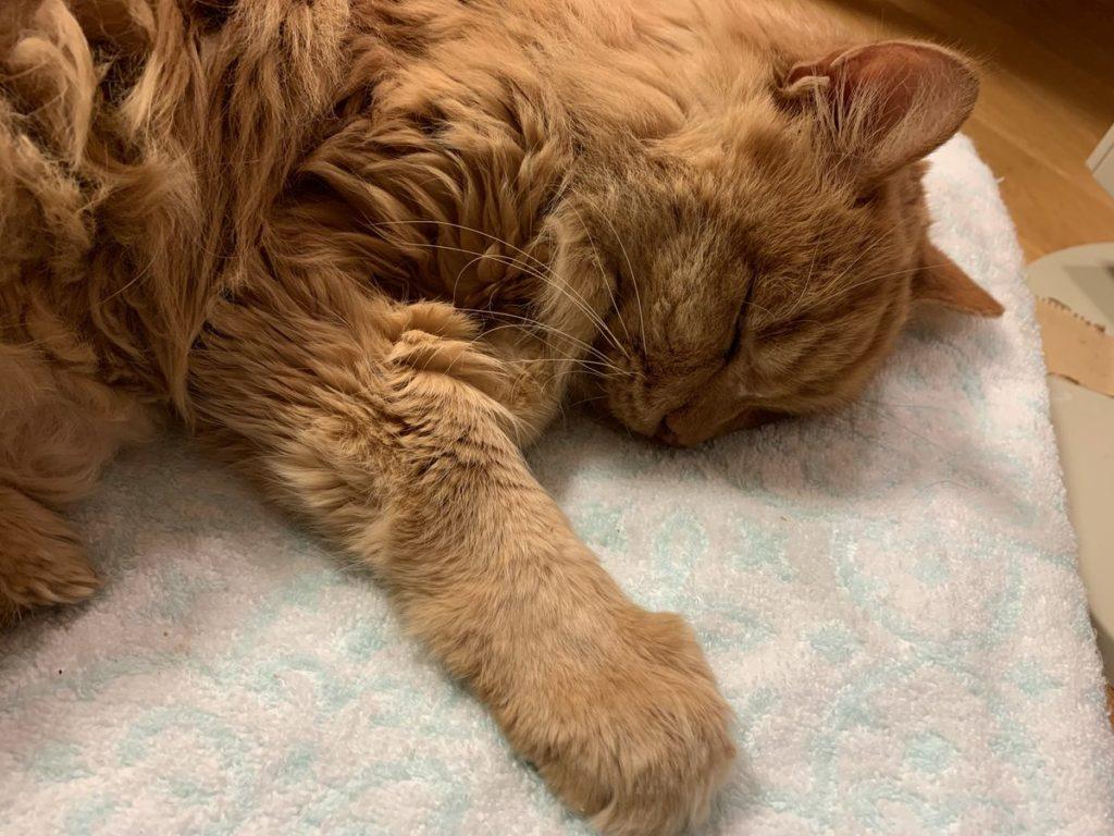 ペットショップで買った猫で、保護猫や野良猫を卑下する人に真の動物愛はあると思いますか?