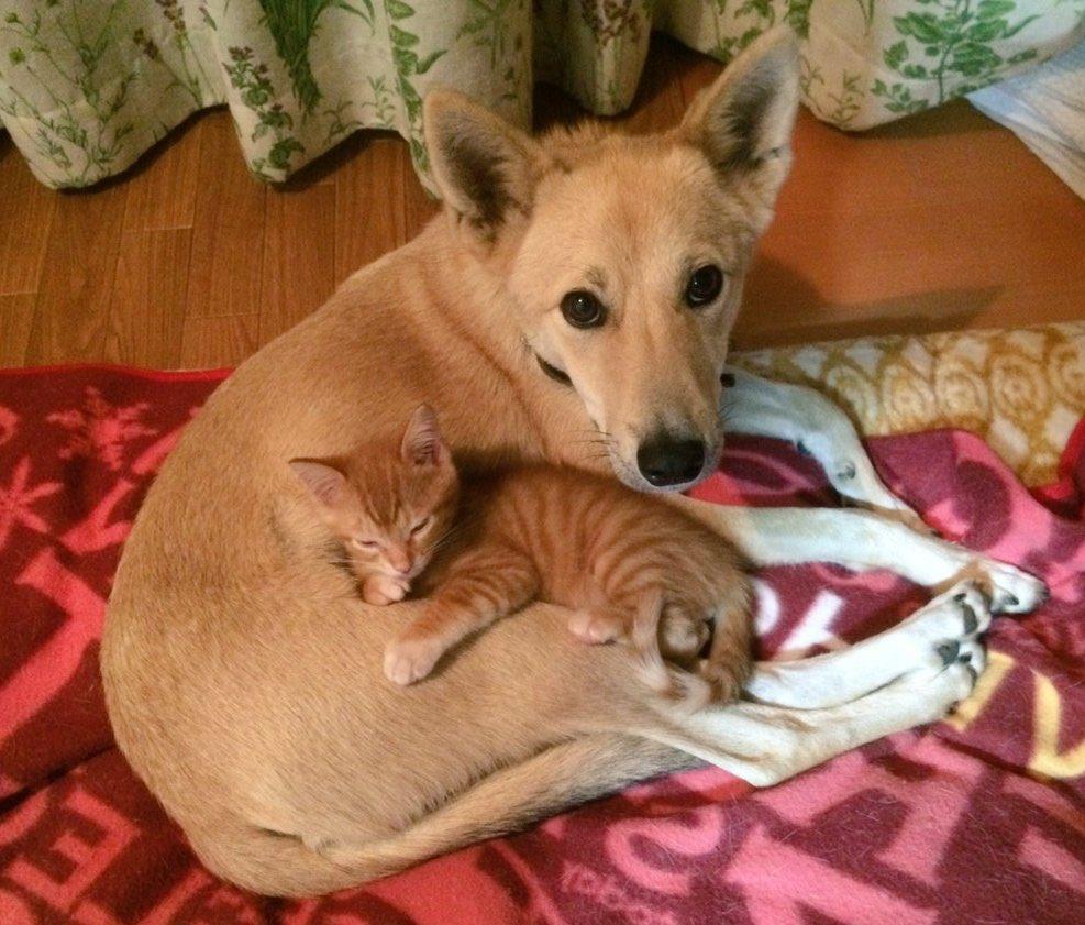 赤ちゃん相談室の猫バージョン「猫ちゃん相談室」が面白くてホッコリすると話題に!