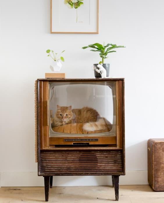 古いブラウン管のテレビを利用した猫の家が可愛すぎると話題に!