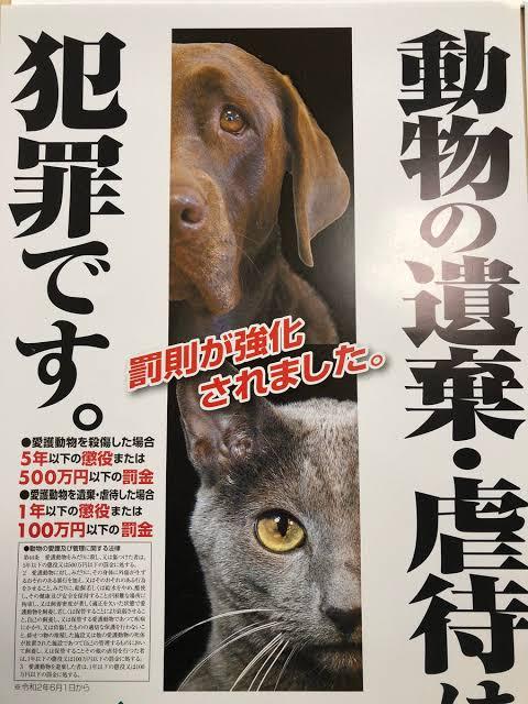ペットを捨てる人「親切な人に見つけてもらってね」→優しそうに聞こえてもこれは犯罪者のセリフです