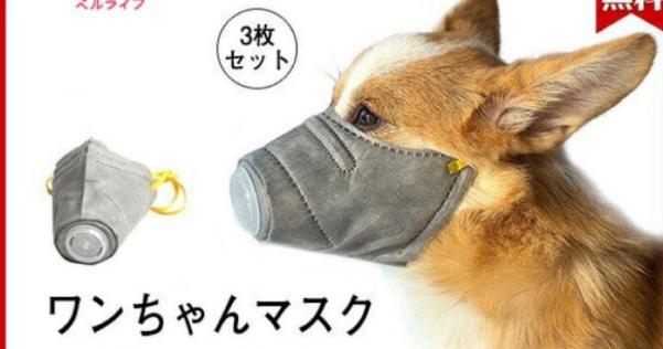 コロナ防止の犬用マスクをつけさせるのは絶対にやめてください!熱中症になります!