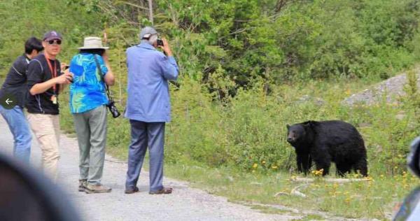 知床でクマに餌付けをする観光客が後を絶たないので、「マイカー乗り入れ禁止」に!