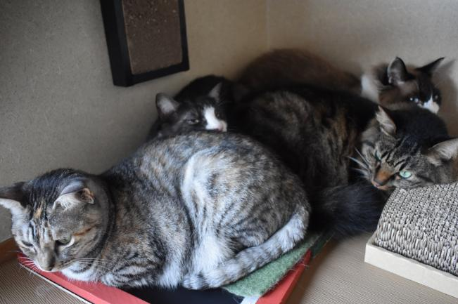 【拡散希望】保護猫74匹を守る別府の新玉旅館が客足激減でピンチ!エサ代や医療のクラウドファンディングにご協力ください!