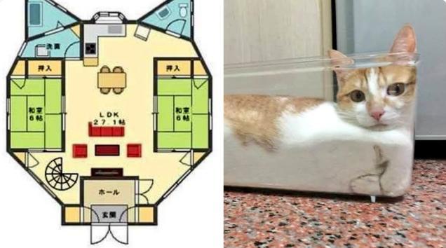 伝説のクソ物件(事故物件)が盛り上がり中!:猫好き間取り