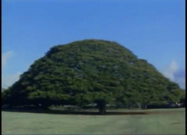画像なのに!笑 「#BGMが聞こえたら負け」まとめ:日立製作所CM 「日立の樹」