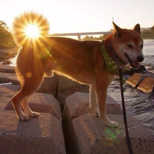 「#なんでそんな画像持ってんだ選手権」の画像がシュールすぎるwww:犬のしっぽと太陽がフュージョン