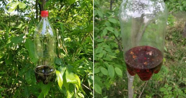 「巨峰カルピス」がスズメバチの駆除に効果的だと判明!