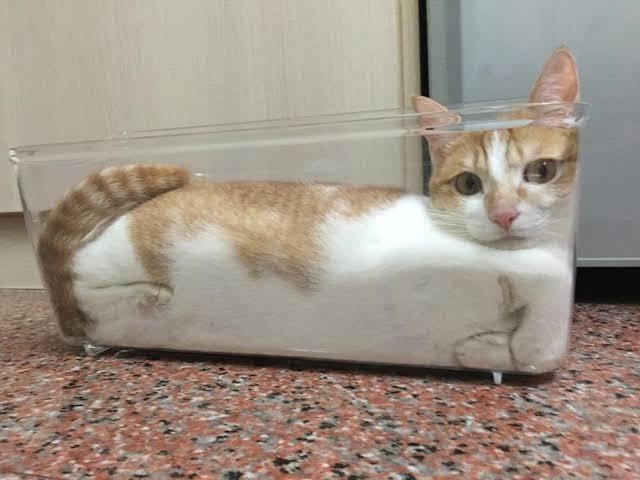 仕事から帰ってきたら、猫が液体になってた