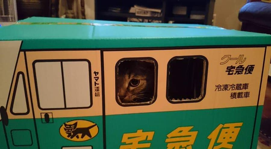 藤あや子さん「人は猫を飼うとこうなります」