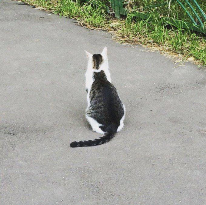 猫の背中に取り憑いていた猫