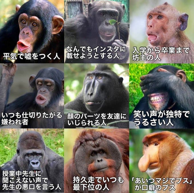 サルでわかるクラスに1人はいる人達