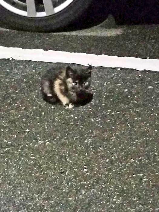 可愛い野良猫ちゃんを見るとSNSに投稿したくなる気持ちは解るけど、場所は絶対に言わにゃいで