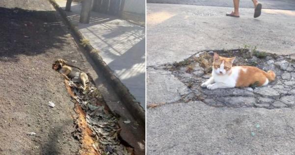 すごいパワーで吹っ飛ばされた犬と身体を重くされた猫www