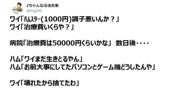 2ちゃんねる名言:ワイ「ハムスター(1000円)調子悪いんか?」