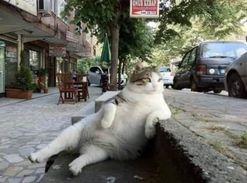 トルコの店前の階段で毎日のように同じポーズを取っていた猫、亡くなった後同じ場所に記念碑が建てられる