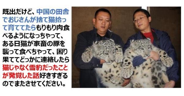 猫を拾って育ててたら・・・猫じゃなく雪豹だったことが発覚した話が面白すぎるwww