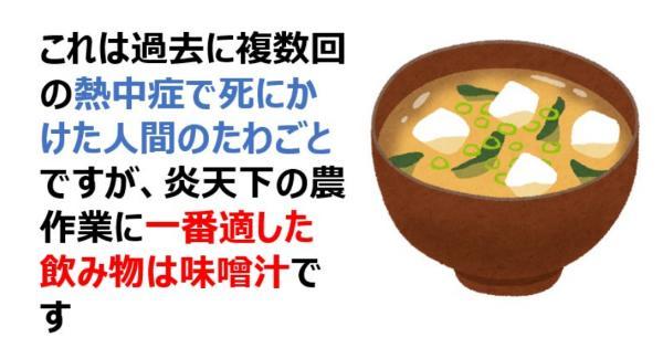 これは過去に複数回の熱中症で死にかけた人間のたわごとですが、炎天下の農作業に一番適した飲み物は味噌汁です