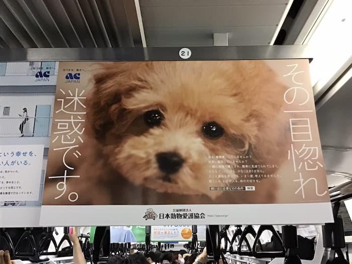 【その一目惚れ迷惑です】動物愛護協会のポスターが考えさせられる